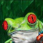"""Red Eye Tree Frog"" by gazzman"