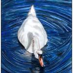 """Swan Reflection"" by gazzman"