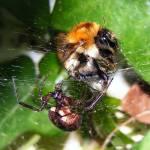 """""""Spider vs Bee"""" by scalespeeder"""