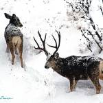 """Deer and Snow #1"" by marla"