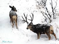 Deer and Snow #1