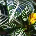 """Greenery"" by ryanphilipp"