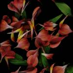 """Parrot Petals 2"" by LindaCavaney"