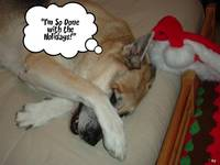 Christmas German Shepherd Humor