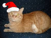 Christmas Orange Tabby Cat