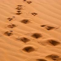 Camel Footprint in the Sahara Desert