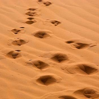 camel foot print에 대한 이미지 검색결과