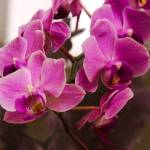 """Flowers"" by ryanphilipp"