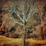"""""""DSC_0039whitetree_fhdr#2"""" by Capizzi"""