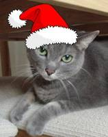 Christmas Russian Blue Gray Cat