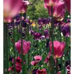 """Floriade II"" by WildVisuals"