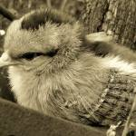 """""""Cultivating Chick"""" by angelandspot"""