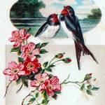 """Vintage Birds"" by angelandspot"