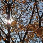 """""""Let the sun shine through"""" by bre1961"""