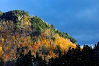 White Mts (Fall '09)