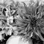"""Lilium"" by hellgah"