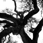 """""""oak"""" by hellgah"""