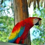 """Scarlet Macaw"" by photologues"