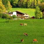 """Swiss Countryside"" by photologues"