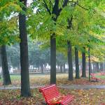 """Red Bench"" by photologues"
