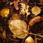 """Fallen"" by KristinSig"