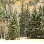 """Early Snowfall"" by rayjacque"