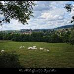 """Trees, Meadow, Cows and Cluny, Burgundy, France"" by stefanbungart"