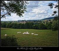 Trees, Meadow, Cows and Cluny, Burgundy, France
