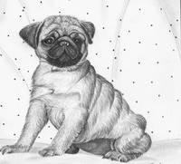 one little pug 2