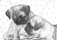 Two Little Pugs 2