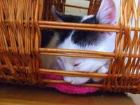 Bibi in the basket