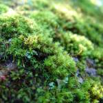 """Mossy Rock"" by qubitgfx"
