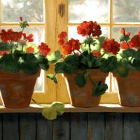 Red Geraniums Basking Art Prints & Posters by Linda Jacobus