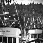 """Fishing Boats in the Harbor Alert Bay"" by sandybuckley"