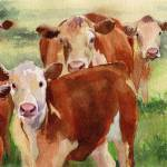"""Curious Cows"" by rachelsstudiodotcom"