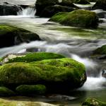 """Mossy River Rocks"" by suddath"