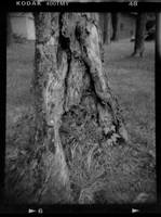 First Holga Roll: Tree Base