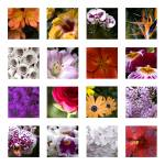"""Flower Mosaic"" by ashtonbancroft"