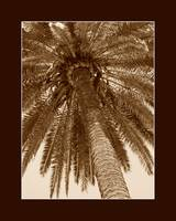 Seppia colored palm tree with border