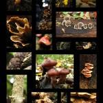"""Autumn Mushrooms"" by jyvonne"