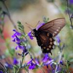 """(365/206) Butterfly Heaven"" by EstherV"