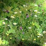 """""""Garden"""" by cleavus"""