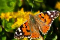 Painted Lady Butterfly Fractal.