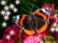 Red Admiral Butterfly Fractal (2)