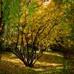 """Golden Autumn Day - Kathryn Albertson Park"" by rsummers"