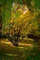 Golden Autumn Day - Kathryn Albertson Park