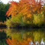 """Idaho Autumn - Kathryn Albertson Park"" by rsummers"