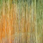 """Paint Brush"" by ellsworth"