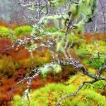 """Mossy Trees Glen Affric"" by kenart"