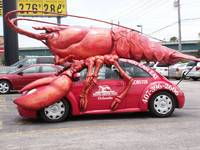 The Rare Lobster Beetle